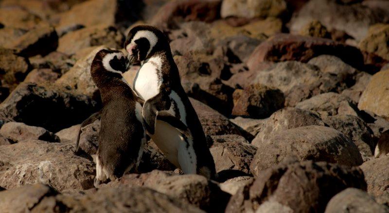 Ulasan Lengkao Mengenai Kandang Ternak Lovebirds