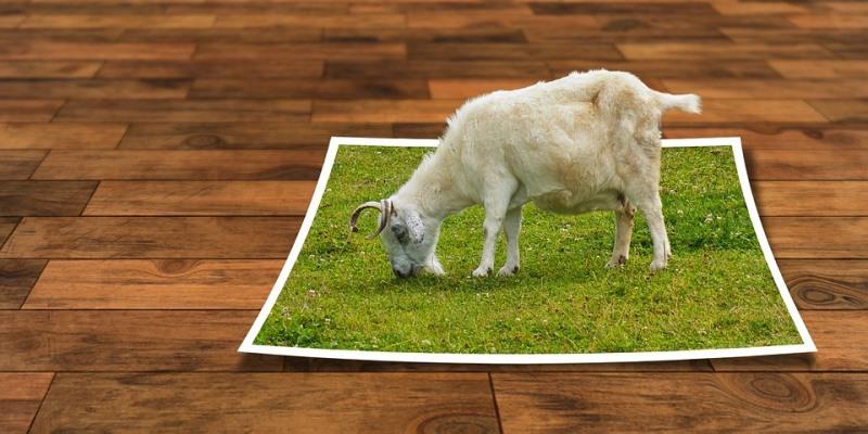 Tanpa Photoshop Anda Bisa Ubah Background Foto Sendiri Dengan Mudah