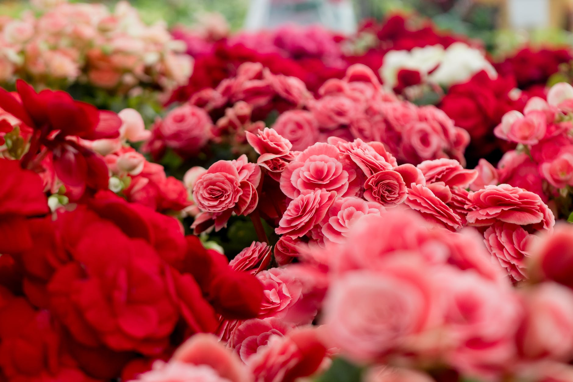 Tips Memilih Karangan Bunga